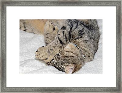 Let Me Sleep Framed Print by Susan Leggett