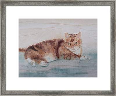 Let Sleeping Cats Lie Framed Print