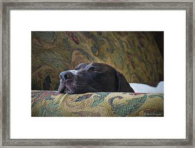 Framed Print featuring the photograph Let Sleeping Dogs Lie. by Phil Abrams