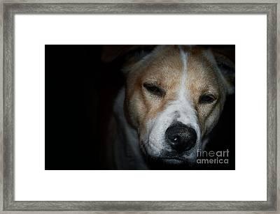 Let Sleeping Dogs Lie. Framed Print by Tim Kravel