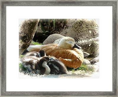 Let Sleeping Ducks Lie Framed Print