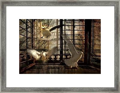 Let The Freedom In Framed Print