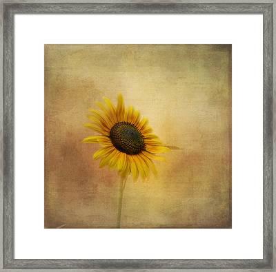 Let The Sun Shine In Framed Print by Kim Hojnacki