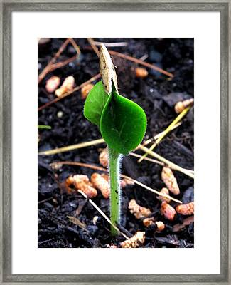 Let There Be Life Framed Print