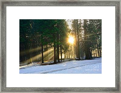 Let There Be Light - Sun Beams Pouring Through A Forest Scene. Framed Print