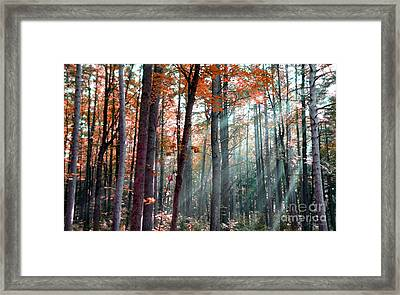 Let There Be Light Framed Print by Terri Gostola