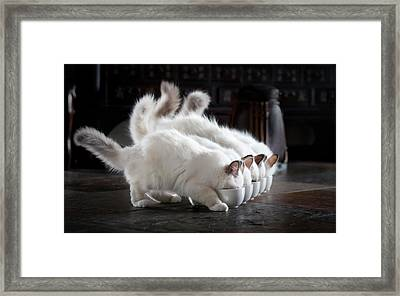 Let There Be Milk Framed Print