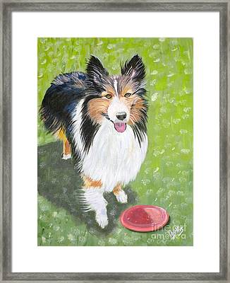Let Us Play  Border Collie Framed Print by Phyllis Kaltenbach