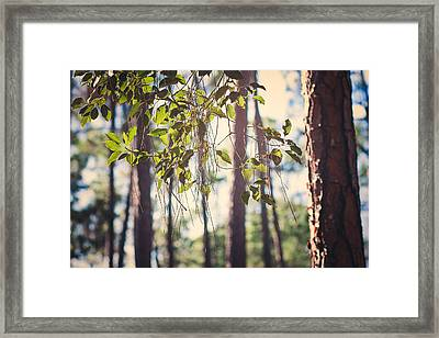 Let Your Light Shine Through Framed Print