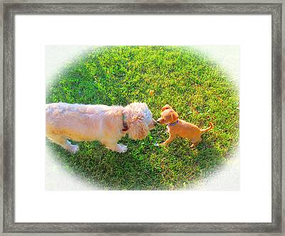 Let's Be Friends Framed Print by Tina M Wenger