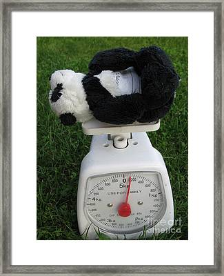 Framed Print featuring the photograph Let's Check My Weight Now by Ausra Huntington nee Paulauskaite