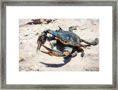 Let's Dance Framed Print by Sennie Pierson
