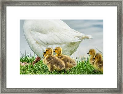 Lets Go For A Walk Framed Print by Joan Herwig