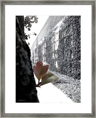 Let's Go Together Framed Print by Glenn McCarthy Art and Photography