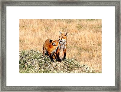 Lets Play Framed Print