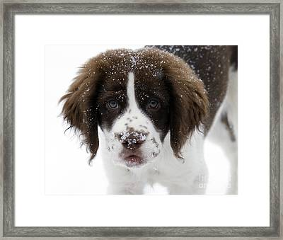 Lets Play Framed Print by Mike  Dawson