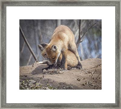 Lets Play Framed Print by Thomas Young