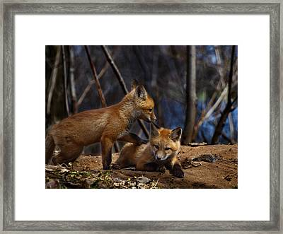 Lets Play Together Framed Print by Thomas Young