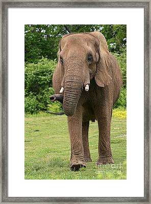 Let's Take A Walk Framed Print
