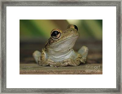 Let's Talk - Cuban Treefrog Framed Print