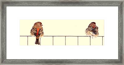 Lets Talk.. Framed Print