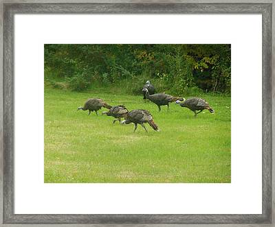 Let's Turkey Around Framed Print