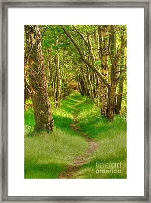 Lets Walk Along The Sunlit Woodland Path Framed Print by John Kelly
