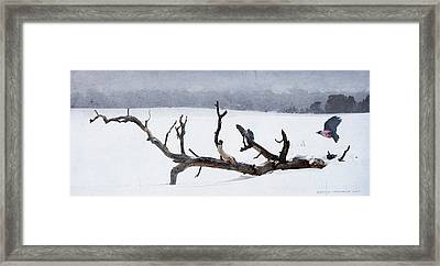 Letting Go  -  Lewis Woodpeckers Framed Print by R christopher Vest