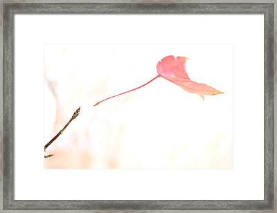 Framed Print featuring the photograph Letting Go by Jason Politte
