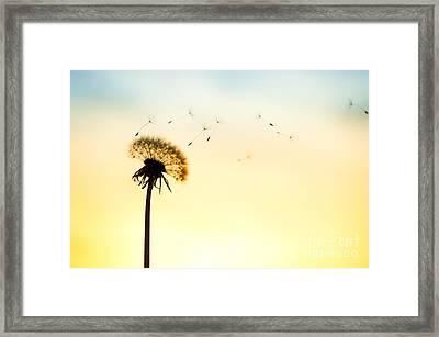 Letting Go Framed Print by Tim Gainey