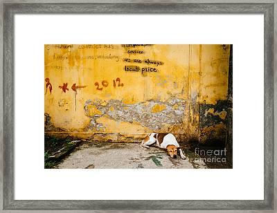 Letting Sleeping Dogs Lie Framed Print by Dean Harte