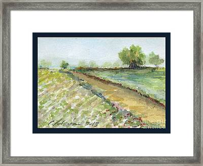 Lettuce Field Framed Print by Cathy Peterson