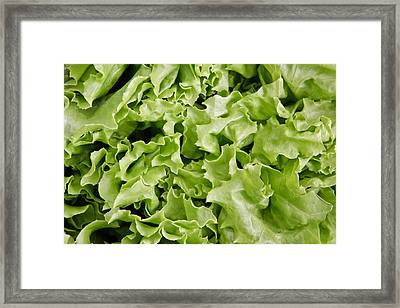 Lettuce Leaves Framed Print by Tom Gowanlock