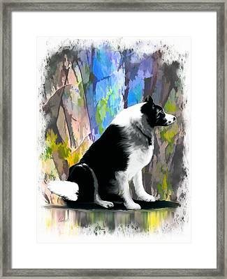 Levi - Unconditional Love Framed Print by Pachek