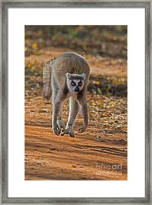 Levitation Framed Print by Ashley Vincent