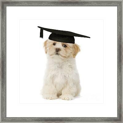 Lhasa Apso Graduate Framed Print