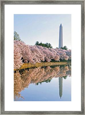Liberty Framed Print by Mitch Cat