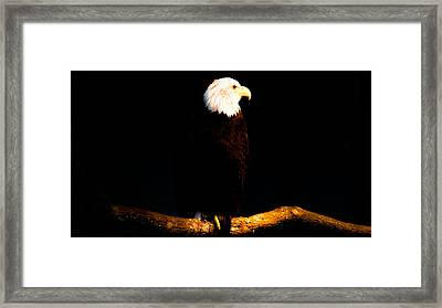 Liberty Framed Print by Philip Zion