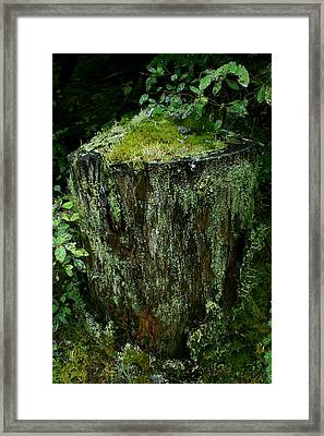 Lichen And Moss Covered Stump Framed Print by Amanda Holmes Tzafrir