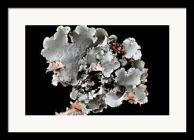 Crustose Framed Prints