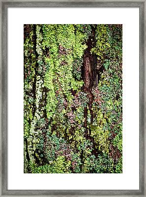 Lichen Framed Print by Elena Elisseeva