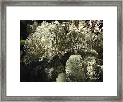 Lichen Forest Framed Print by Tayt Dame