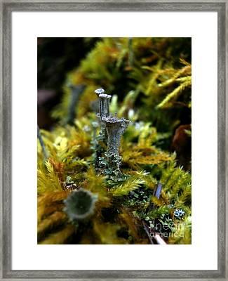 Lichen Hill Framed Print by Steven Valkenberg