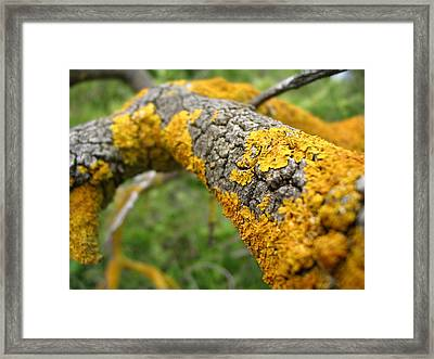 Lichen On Branch Framed Print