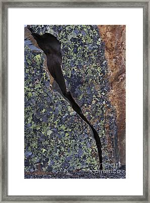 Lichen On Granite Framed Print by Heiko Koehrer-Wagner