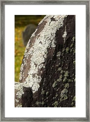 Lichen On Headstone Framed Print by Allan Morrison