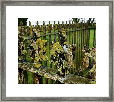 Lichen On Iron Railings In Unpolluted Air Framed Print by Cordelia Molloy