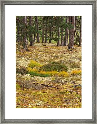 Lichens And Grasses On The Forest Floor Framed Print