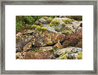 Lichens And Moss In Glen Strathfarrar Framed Print by Louise Heusinkveld