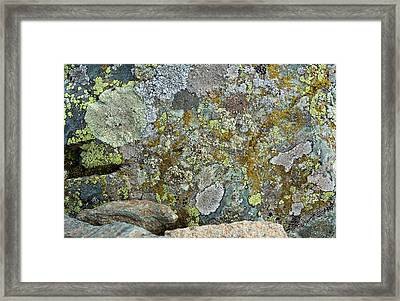 Lichens On A Rock Framed Print by Bob Gibbons